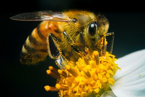 Insect「Bees Suck Sweet Honey」:スマホ壁紙(16)