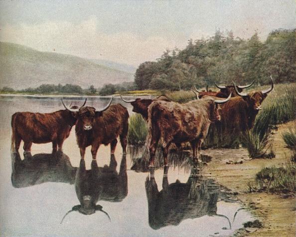 Water Surface「Scotland」:写真・画像(3)[壁紙.com]