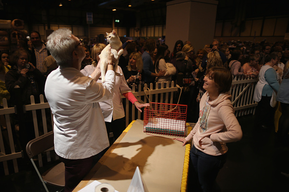 Kitten「The Supreme Cat Show 2015」:写真・画像(7)[壁紙.com]