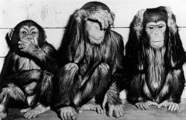 Monkey「Three Wise Monkeys」:写真・画像(4)[壁紙.com]