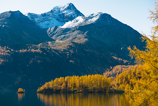 European Larch「Silvaplana lake 5 Engadine Switzerland」:スマホ壁紙(4)