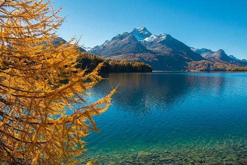 European Larch「Silvaplana lake 6 Engadine Switzerland」:スマホ壁紙(6)