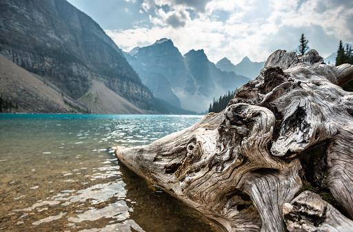 National Park「bark wood in the Moraine Lake at Banff National Park」:スマホ壁紙(0)