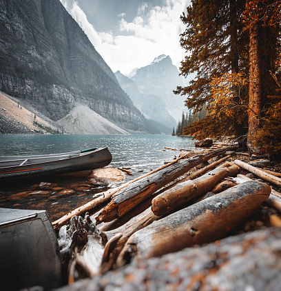 National Park「bark wood in the Moraine Lake at Banff National Park」:スマホ壁紙(5)