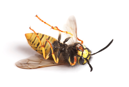 大昔の「dead wasps」:スマホ壁紙(16)