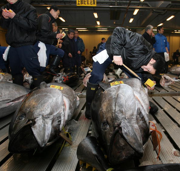 Japan「Tsukiji Wholesale Fish Market Opens First Auction Of The New Year」:写真・画像(9)[壁紙.com]