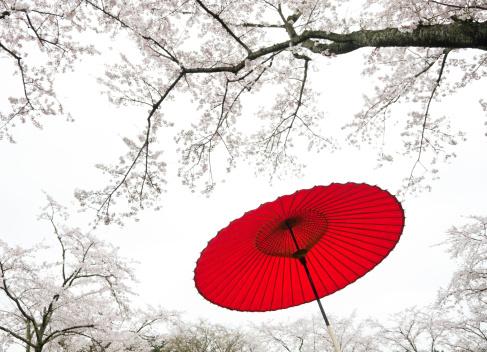 Cherry Blossoms「Japanese Umbrella」:スマホ壁紙(9)