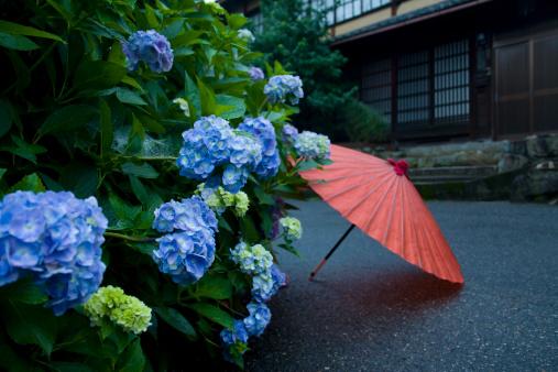 あじさい「Japanese Umbrella and Hydrangea」:スマホ壁紙(14)