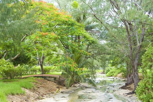 Northern Mariana Islands「Stream in grove, Saipan Island, USA」:スマホ壁紙(2)