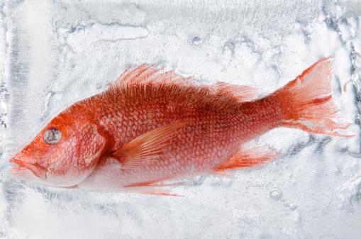 円形「Frozen fish in ice」:スマホ壁紙(7)