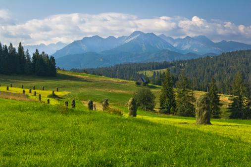 放牧地「夏季の山の風景」:スマホ壁紙(4)