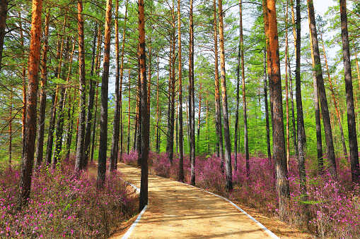 Heilongjiang Province「Spring scenery of Greater Khingan Range, Heilongjiang Province, China」:スマホ壁紙(18)