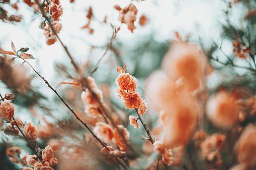 Pastel「Spring scene - pink cherry blossom. Pastel color toned.」:スマホ壁紙(6)