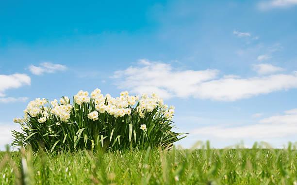 春の風景:スマホ壁紙(壁紙.com)