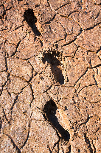 Barefoot「Human footprints through mud cracks at Thirlmere reservoir in the Lake District UK, with a hosepipe ban in affect in the North West. United Utilities applied for the drought order, after the driest start to the year since 1929, with less than 50% of norma」:スマホ壁紙(0)