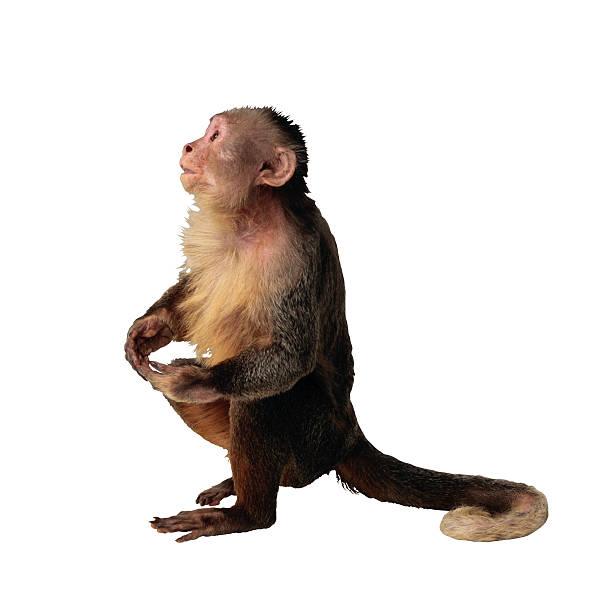 Monkey:スマホ壁紙(壁紙.com)