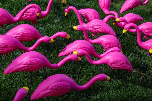 キッチュ「Flock of pink plastic flamingos」:スマホ壁紙(13)