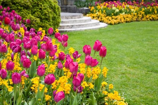 Ornamental Garden「Pink and yellow flowers around a garden lawn」:スマホ壁紙(0)