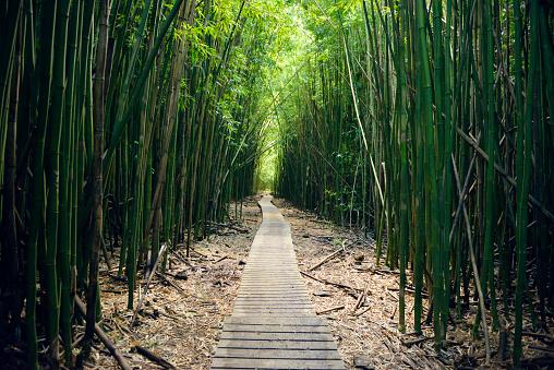 Haleakala National Park「USA, Hawaii, Maui, Haleakala National Park, bamboo forest at Pipiwai Trail」:スマホ壁紙(5)