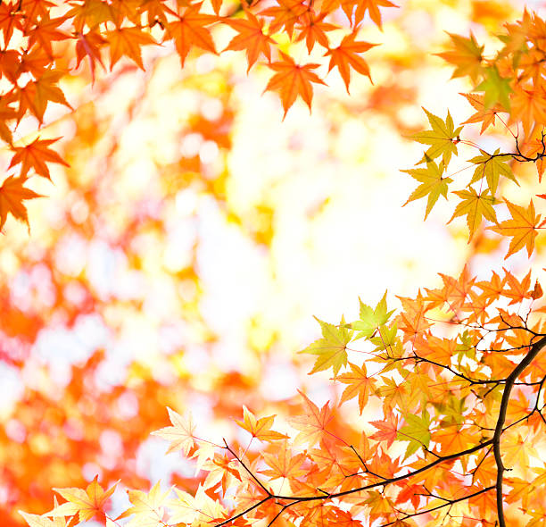 鮮やかな秋の紅葉:スマホ壁紙(壁紙.com)