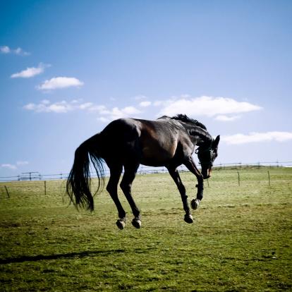 Horse「Bucking Horse in Pasture」:スマホ壁紙(7)
