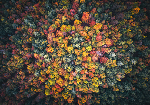 Tree Canopy「Colorful Forest」:スマホ壁紙(13)