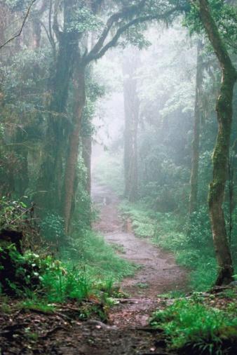 霧、立ち込める山道のまとめ:2006年12月15日(壁紙.com)