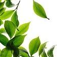 茶葉壁紙の画像(壁紙.com)