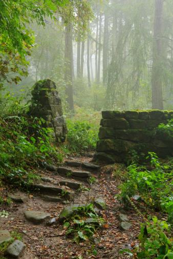 森林へのまとめ:2013年10月15日(壁紙.com)