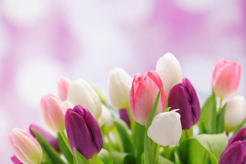 色鮮やかなチューリップの背景に照明:スマホ壁紙(壁紙.com)