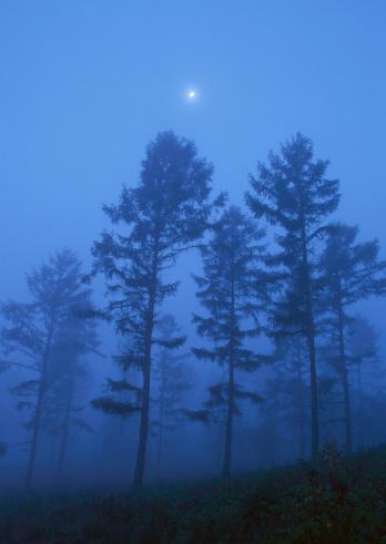 木々らそびえ立つのまとめ:2010年11月17日(壁紙.com)