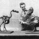 Dodo壁紙の画像(壁紙.com)