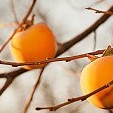 柿壁紙の画像(壁紙.com)