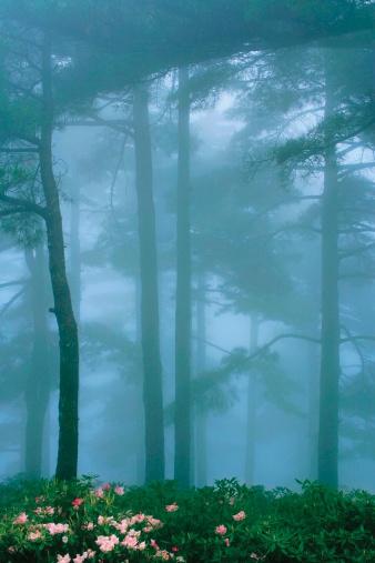 霧に囲われてのまとめ:2008年11月20日(壁紙.com)