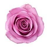 紫壁紙の画像(壁紙.com)