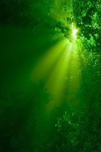 翠の空間のまとめ:2009年11月26日(壁紙.com)
