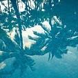 バリ島壁紙の画像(壁紙.com)