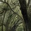 アメリア島壁紙の画像(壁紙.com)