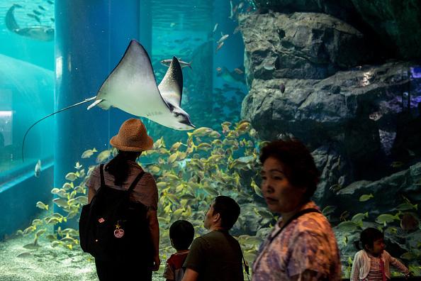 Neons And Jellyfish Attract Tokyoites To High-tech Aquarium:ニュース(壁紙.com)