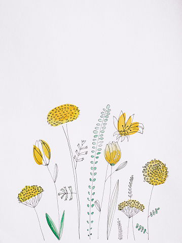 Belgium「Yellow flowers watercolor painting on white background」:スマホ壁紙(17)
