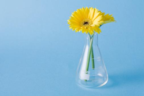 Planting「Yellow flowers in vase on blue background」:スマホ壁紙(1)