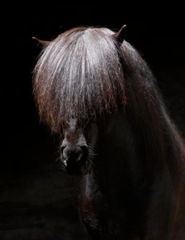 Stallion「Portrait of Stallion」:スマホ壁紙(2)