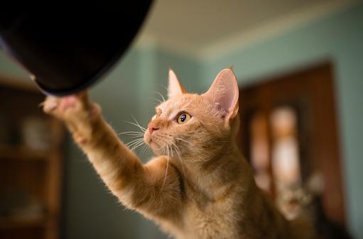 Sideways Glance「Portrait of curious cat」:スマホ壁紙(8)