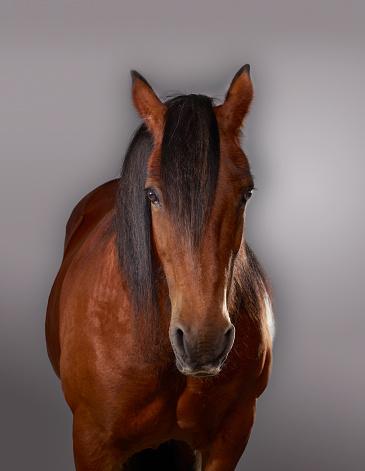 Horse「Portrait of a Horse」:スマホ壁紙(15)