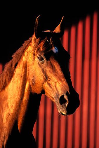 Horse「Portrait of a Horse at sunset」:スマホ壁紙(19)