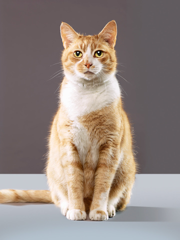 Sitting「Portrait of cat」:スマホ壁紙(16)