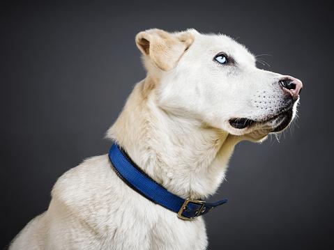 Animal Body「Portrait of a mixed breed dog.」:スマホ壁紙(14)