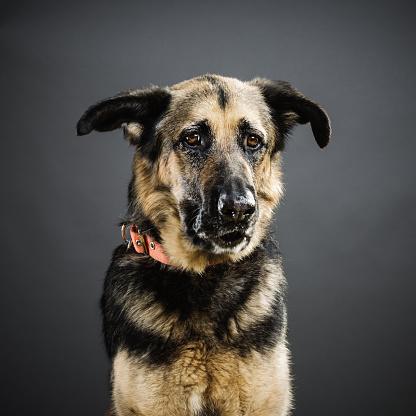 Animal Body「Portrait of a mixed breed dog.」:スマホ壁紙(16)