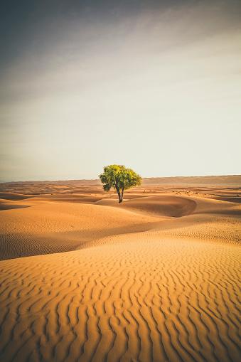 Single Tree「lonely tree in the wahiba sands desert of oman」:スマホ壁紙(1)