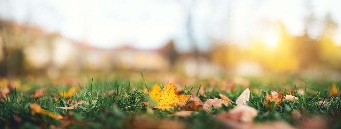 かえでの葉「秋の葉の公園」:スマホ壁紙(10)
